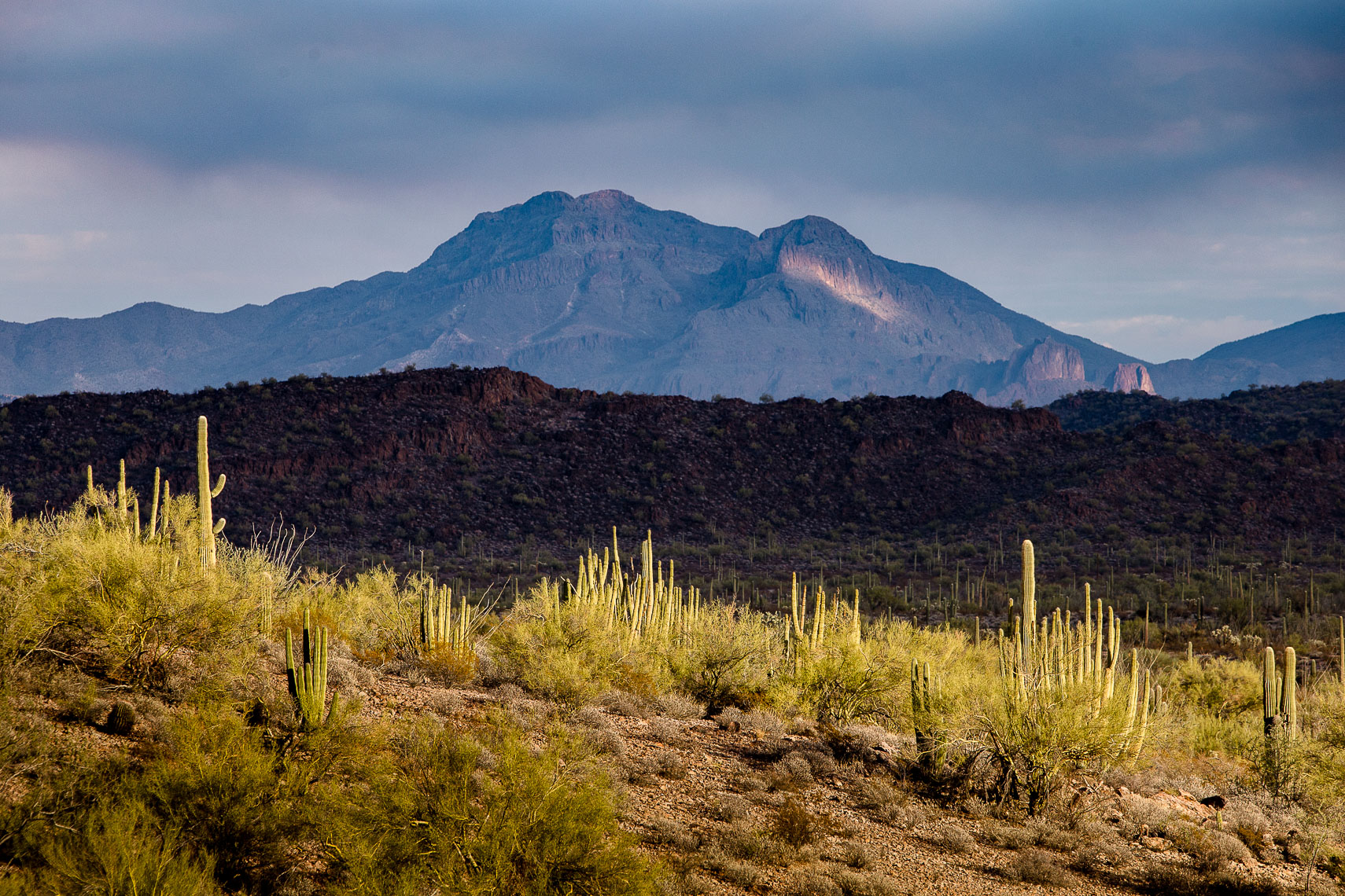 Layers of Light, Organ Pipe Cactus National Monuent